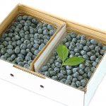 blueberry-1001